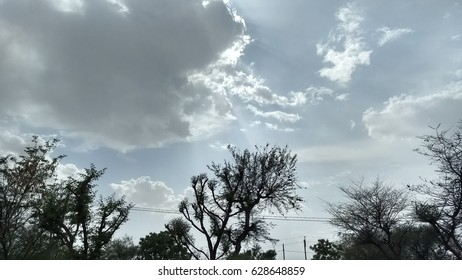 cloudy sky with tree.