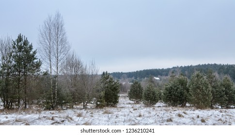 cloudy winter landscape