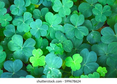 Clover Colors - Shutterstock ID 599678624