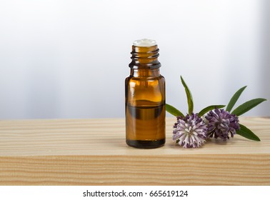 Clover essential oil and fresh clover blossom