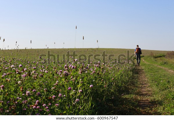 A clover field, a lonely tourist with a backpack, a sunny summer morning.
