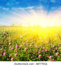 Clover field,blue sky and sun.