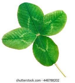Clover four leaf, isolated on white