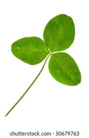 clover isolated on a white