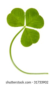 clover isolated on a white background