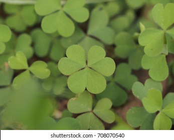 Clover leaf with heart shapes
