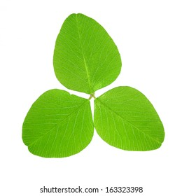 Clover leaf isolated on white