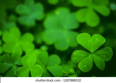 Clover Leaves for Green background with three-leaved shamrocks. st patrick's day background, holiday symbol. growing