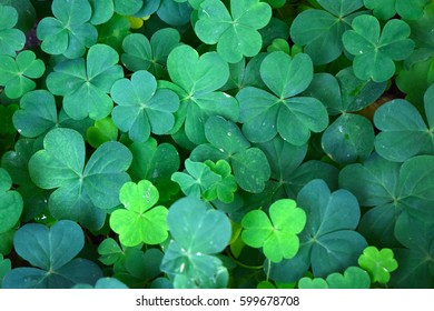 Clover Leaves in Green for St. Patrick Day - Shutterstock ID 599678708