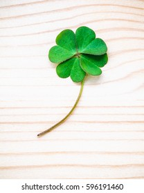 Clover leaves on wooden background. The symbolic of Four Leaf Clover the first is for faith, the second is for hope, the third is for love, and the fourth is for luck with flat lay and copy space .