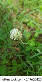 clover in nature against all odds