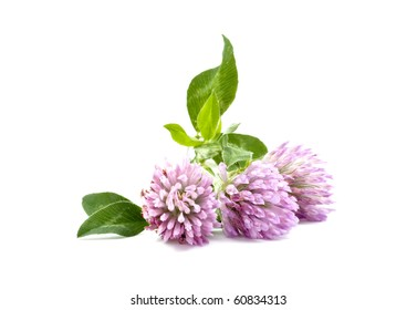 clover on a white background