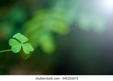 Clover tree Symbol of Hope for background
