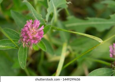 Plant Genus Name Images, Stock Photos & Vectors | Shutterstock