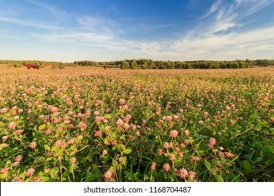 Clover (trefoil) field in Klinsky District. It is raion of Moscow Oblast, Russia. It borders with Tver Oblast, Lotoshinsky, Volokolamsky, Istrinsky, Solnechnogorsky and with Dmitrovsky District.