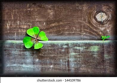 clover & wood
