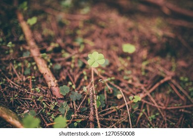 cloverleaf in the forest