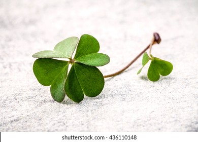 Clovers leaves  on Stone .The symbolic of  Four Leaf Clover the first is for faith, the second is for hope, the third is for love, and the fourth is for luck. Clover and shamrocks is symbolic dreams .