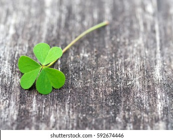 Clovers on grunge old aged wooden background, shamrock leaves, saint patrick's day