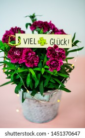 Cloves (Dianthus) in small pot on pink underground, birthday greeting, good luck