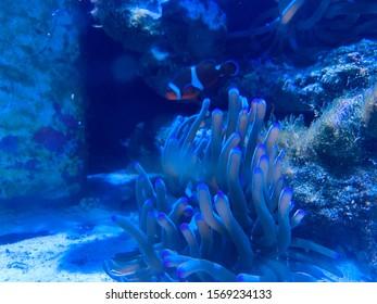 Clown Fish aquarium from Atlantis in Bahamas