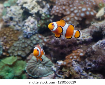 Clown fish. This is the brightest representative of the deep sea, which can live not only in nature but also in the aquarium.