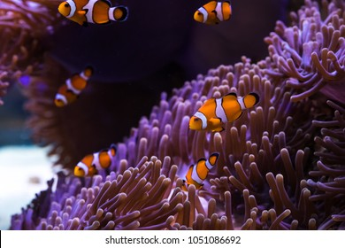 clownfish and sea anemone rely on each other.
