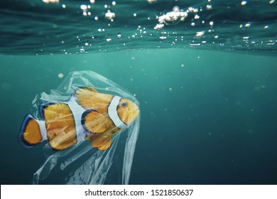 Clownfish trapped in plastic. Pollution in oceans concept.