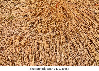 a clump of dry grass
