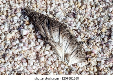 A clump of feathers on a bed of shells, at Salton Sea Beach in California