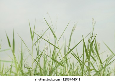 Clump of grass background green