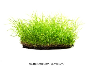 Clump of grass with dirt isolated on white background