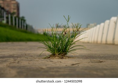 Clump of grass on brown surface surrounded by white pillars and a cityscape on a sunny day in asia
