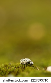 clump of moss