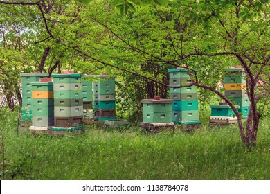 A cluster of beehives sit among trees. The wooden colorful boxes are painted bright colors. Wooden multi-colored beehives for bees. Vintage Beehives in various colors.
