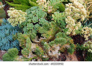 cluster of green Cactus and Succulent plants growing