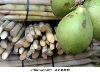 Cluster of green coconut, on sugarcane background, in juice stand. Brazil