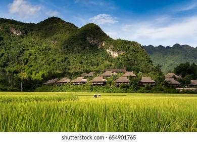 A cluster of homestays on a hillside in Mai Chau Vietnam