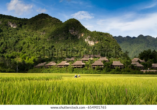 A cluster of homestays on a hillside in Mai Chau Vietnam