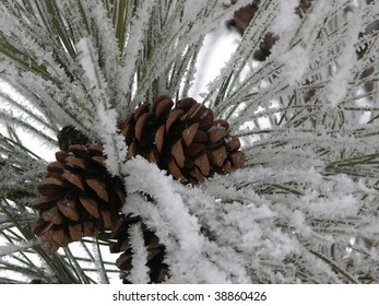 cluster of pinecones on a snowy pine bough