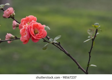 A cluster of red flowers in front of soft green background