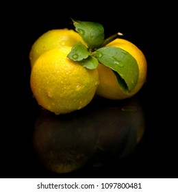 cluster of three lemons on the same branch, on black mirror