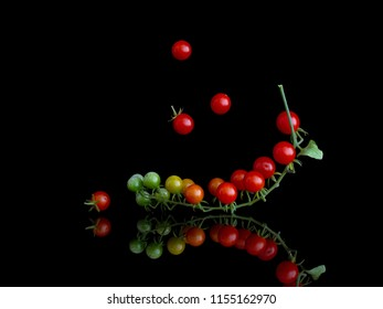Cluster of tiny red currant tomatoes on vine , Solanum pimpinellifolium, on shiny surface and isolated on black.