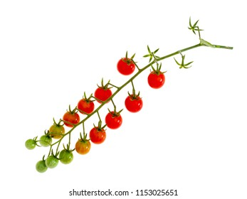 Cluster of tiny red tomatoes on vine , Solanum pimpinellifolium. Isolated on white.