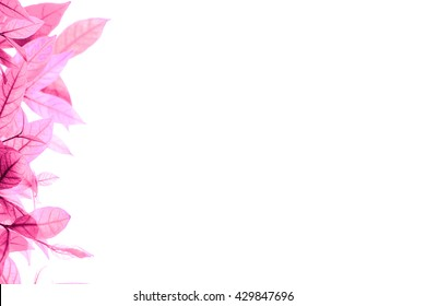 cluster of tree leaves in pink color on the left side with white background