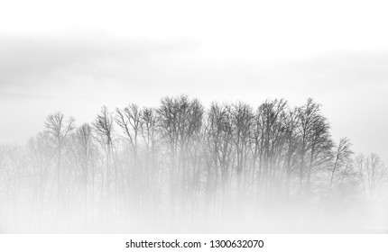 A cluster of trees sticking out of the misty morning fog.