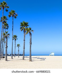 A cluster of very tall palm trees on a beach with a life guard tower in the background against a clear blue sky, the Pacific Ocean and Venice Beach Pier in southern Californian in the USA.