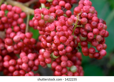 A cluster of wild red berries
