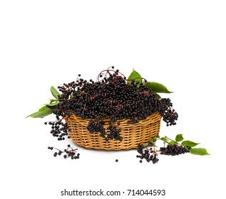 Clusters fruit black elderberry (Sambucus nigra) and leaves in the basket on a white background. Common names: elder, black elder, European elder and European black elderberry