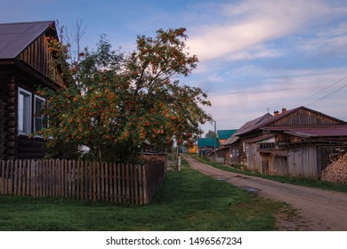 Clusters of mountain ash and wood house